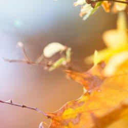 colorful-autumn-leaves-picjumbo-com